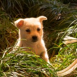 紹興の子犬(イメージ画像)