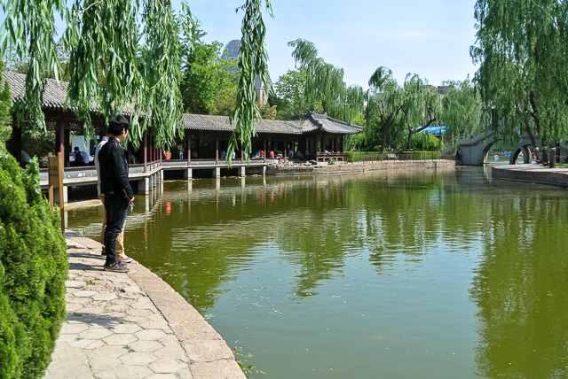 池と柳@北京団結湖公園